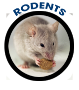 Rodents Pest Control Wildlife Albany Exterminator Mice Moles Raccoons Skunks Voles